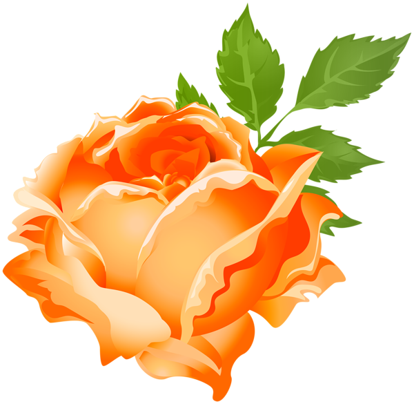Rose clipart stick. Orange png clip art