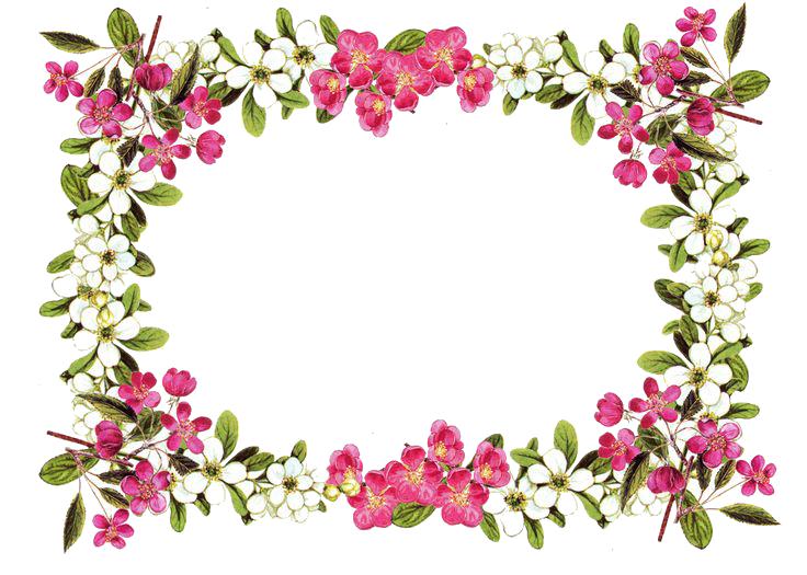 Floral clipart fuschia. Flower border png download