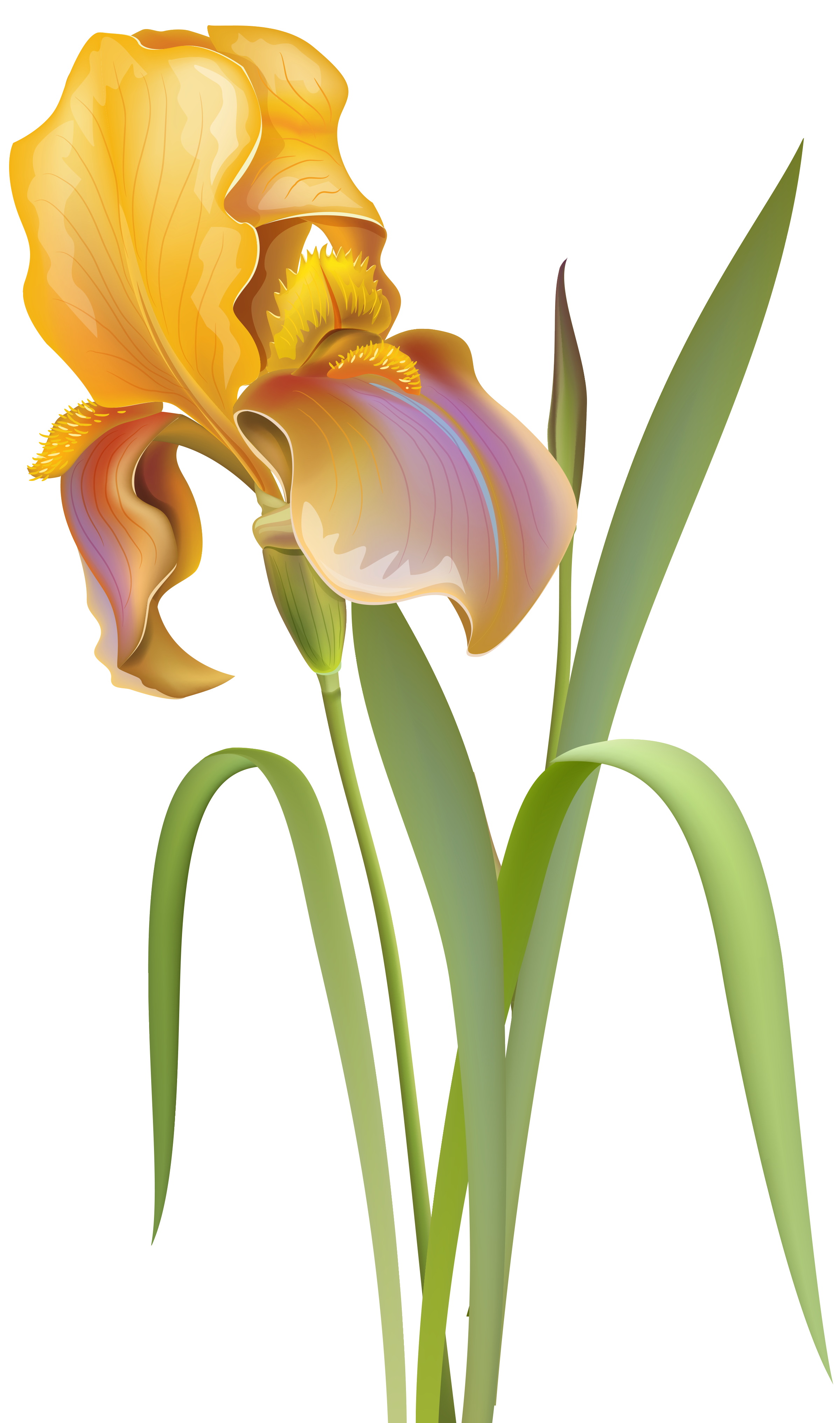 Iris png clip art. Clipart cars flower
