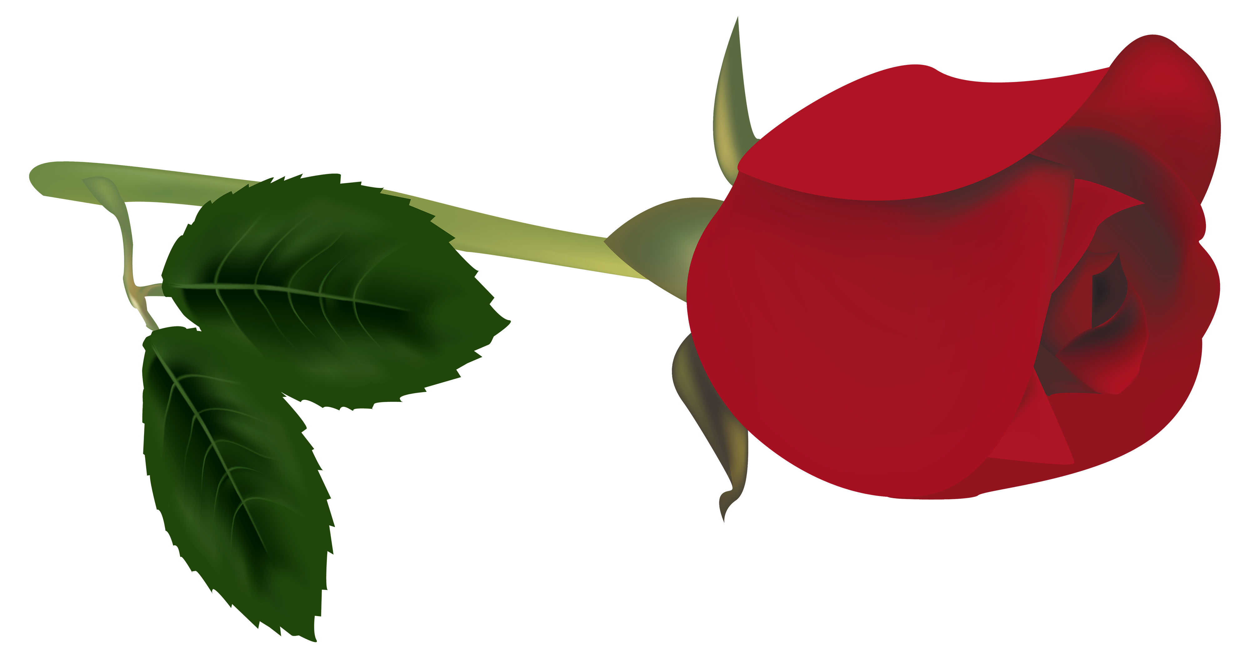 Family clipart red. Rose bud png best