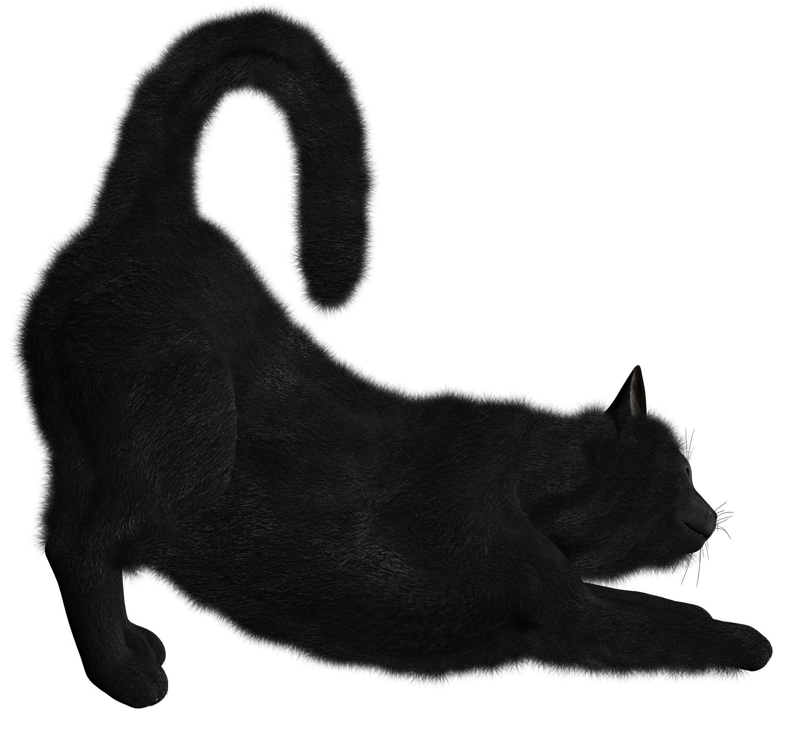 Png black cat collection. Kittens clipart cate