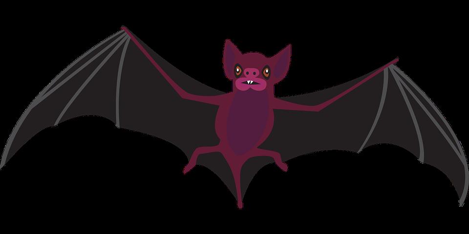 Clipart cat bat. Scary frames illustrations hd