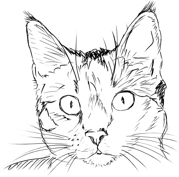 Face drawing at getdrawings. Clipart cat black and white