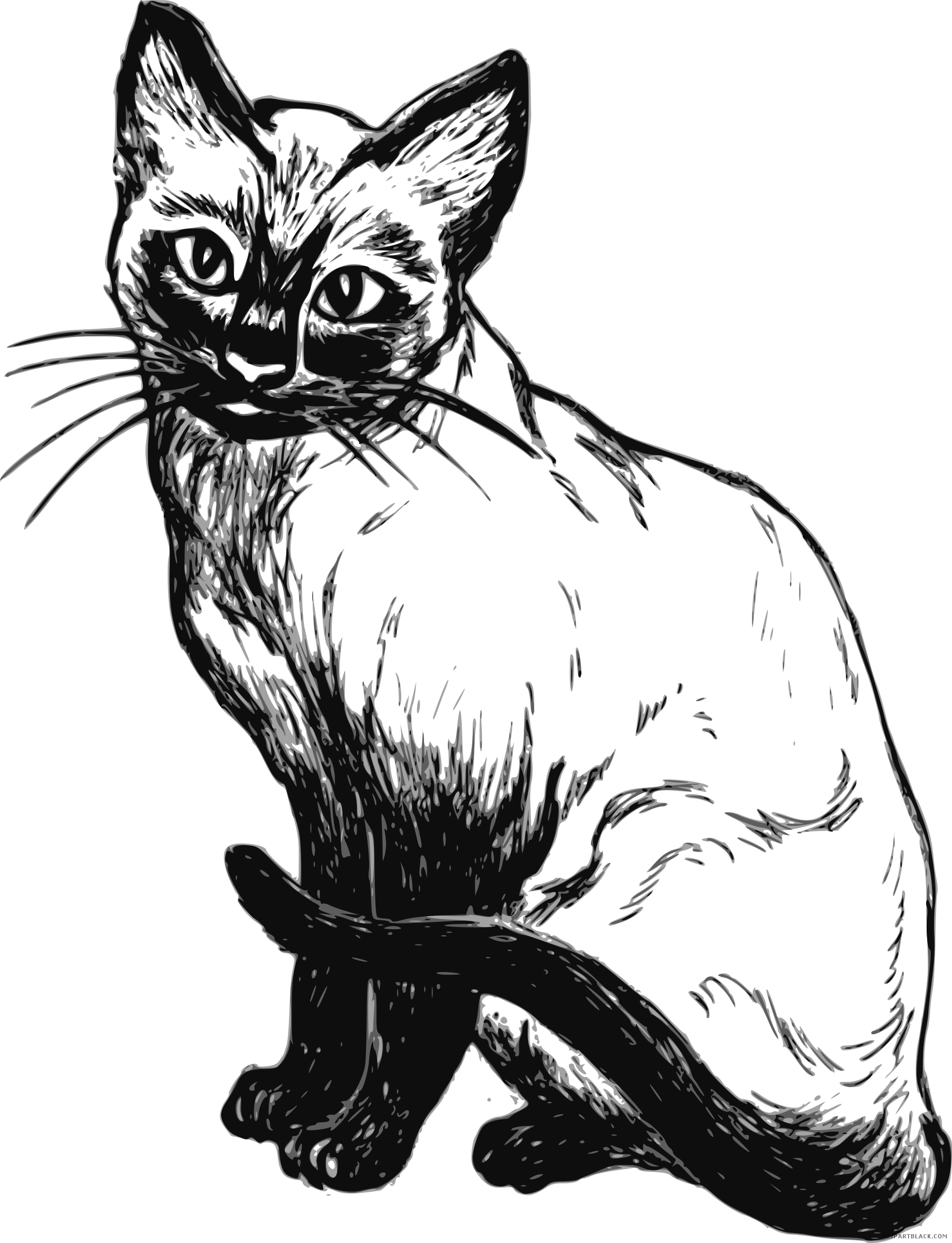 Siamese clipartblack com animal. Clipart cat black and white