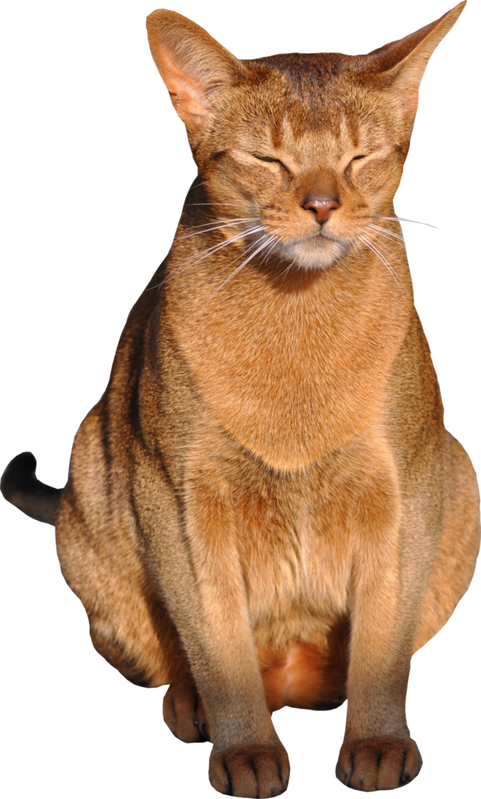Cat with background by. Png transparent images