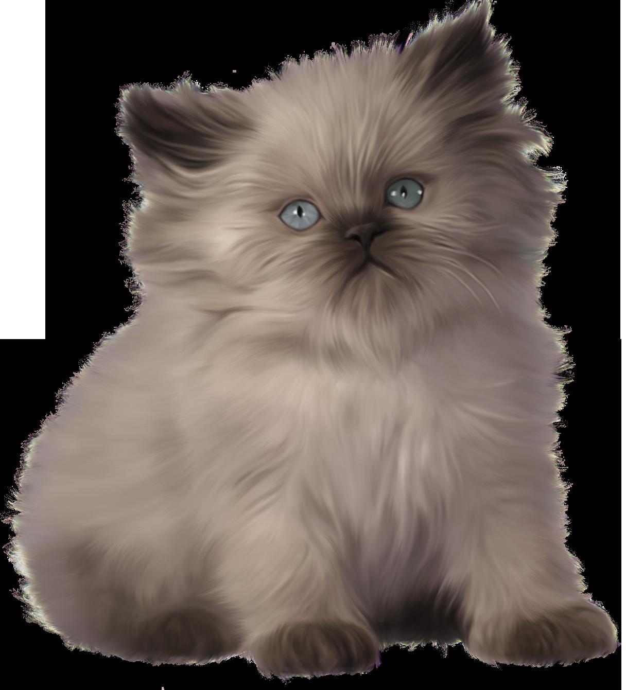 Png best web. Kitten clipart file