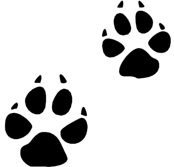 new cat paw. Pawprint clipart color