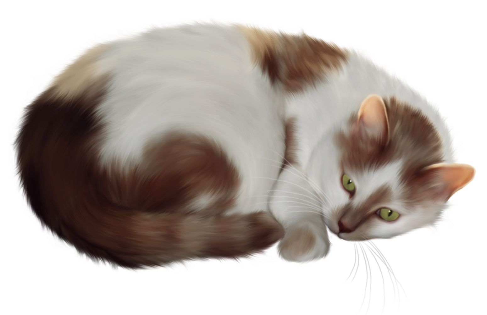 Clipart cat transparent background. Png gallery yopriceville high