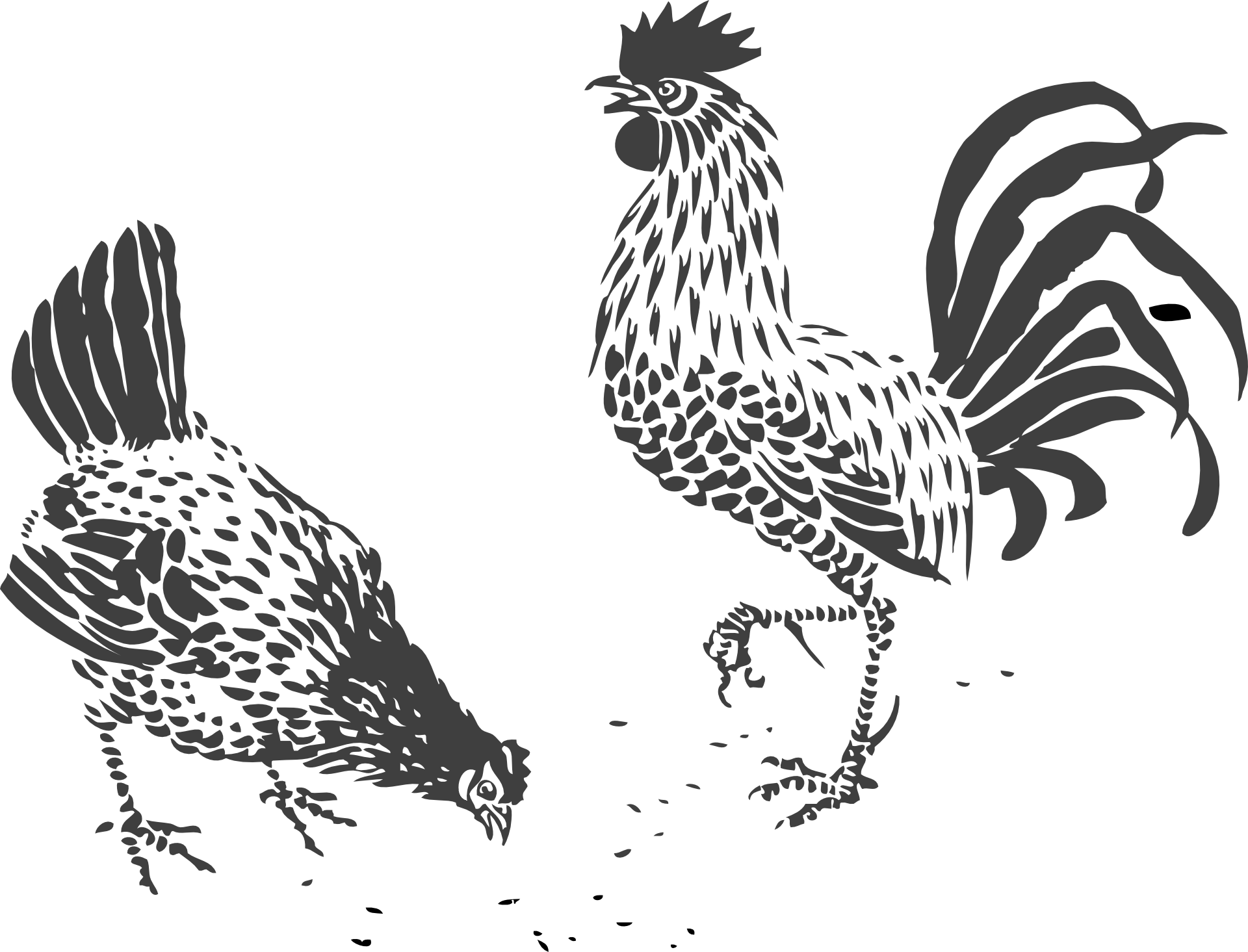 Chicken line art rooster. Hen clipart drawing