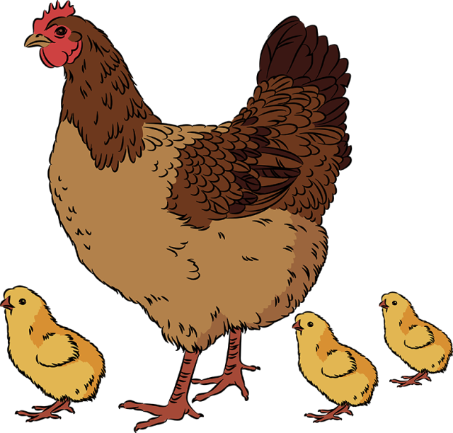 Chick hen pencil and. Nest clipart chicken