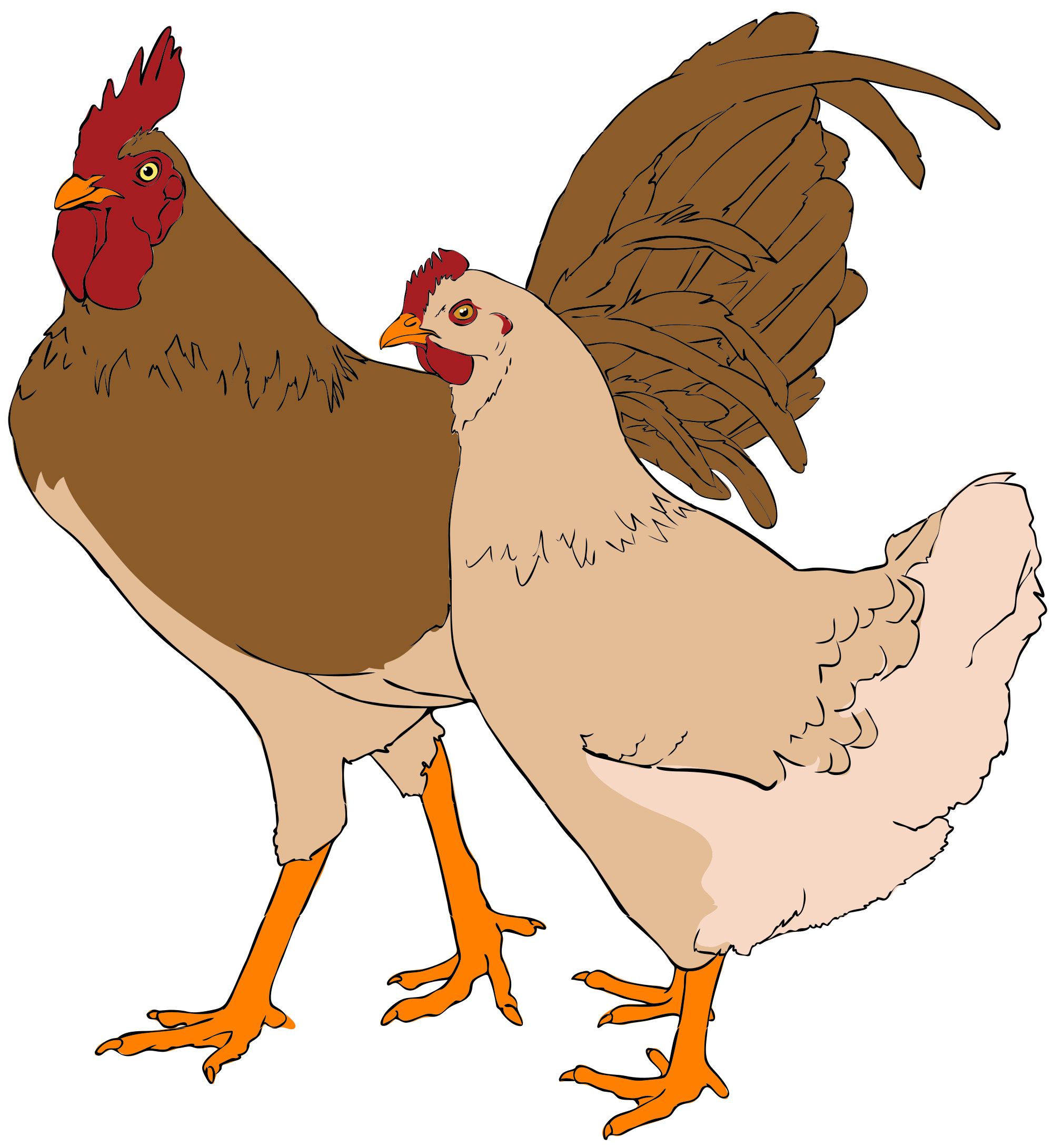 collection of comb. Picture clipart chicken