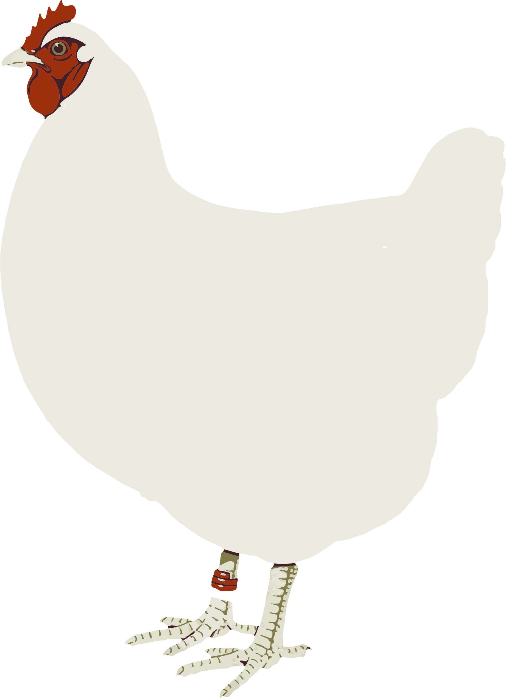 Chicken. Hen clipart poultry
