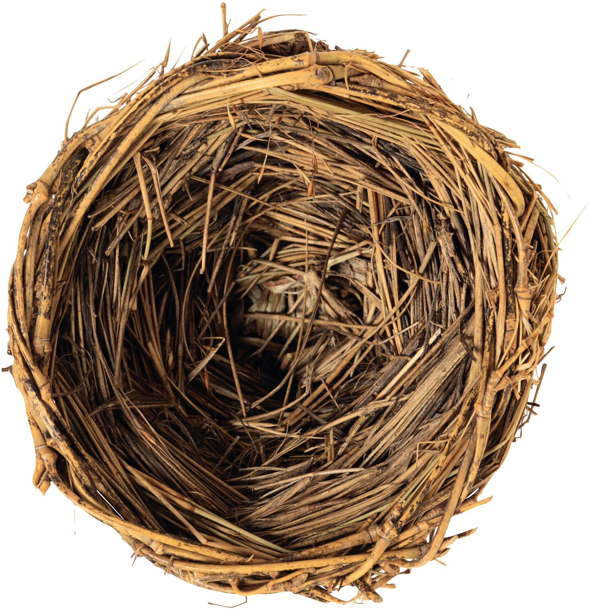 Nest clipart bird's nest. Edible birds bird clip