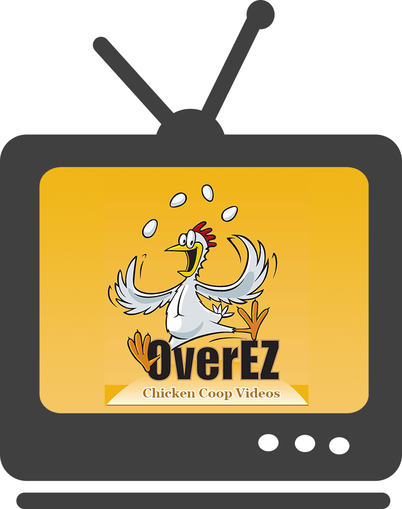 Faq overez coops where. Hen clipart chicken eating corn