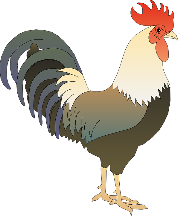 Hen clipart 2 french. Pin by on pinterest