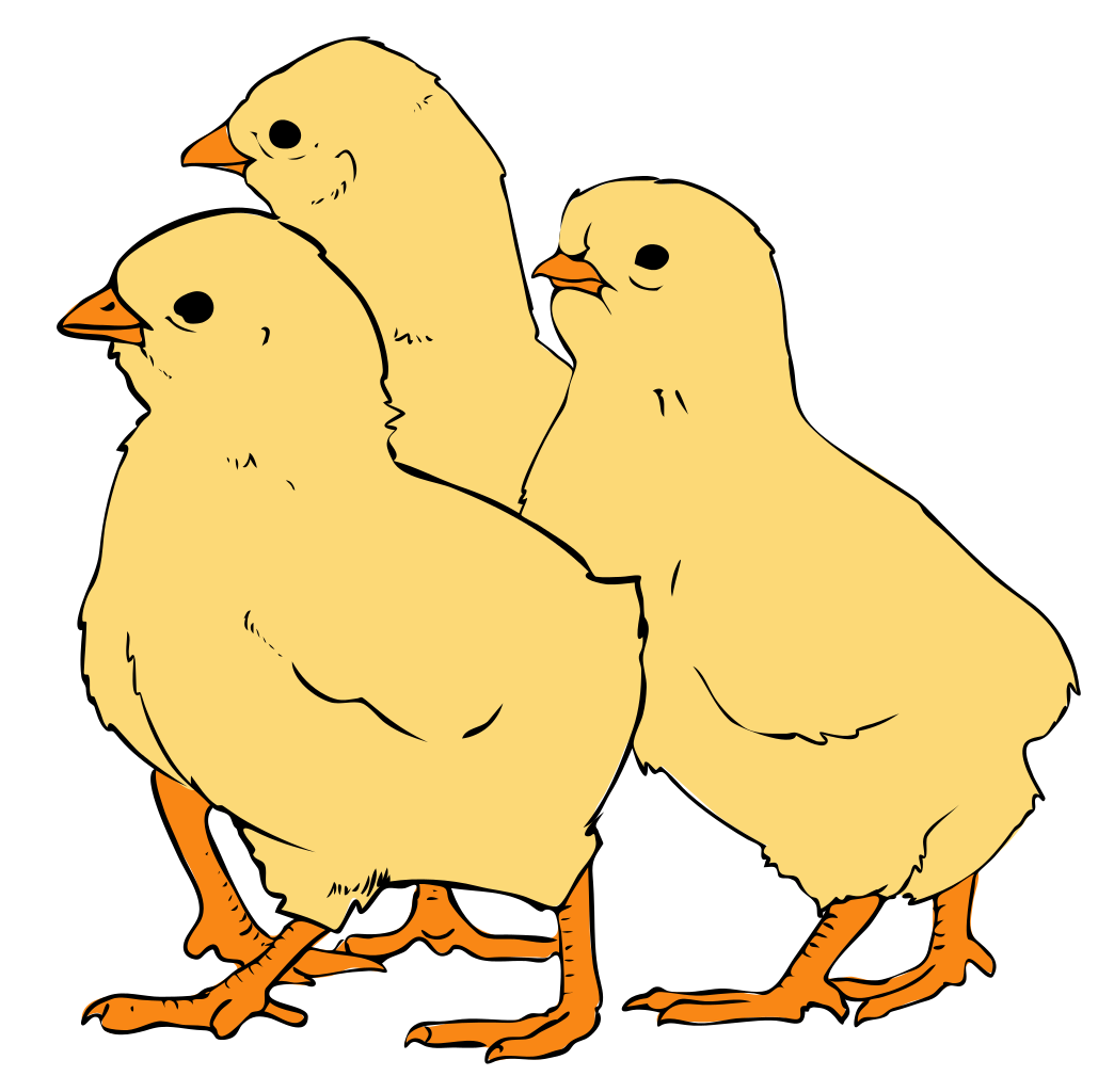 File chicks wikipedia filechicks. Clipart chicken svg
