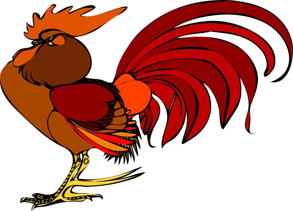 Free on dumielauxepices net. Clipart chicken tail