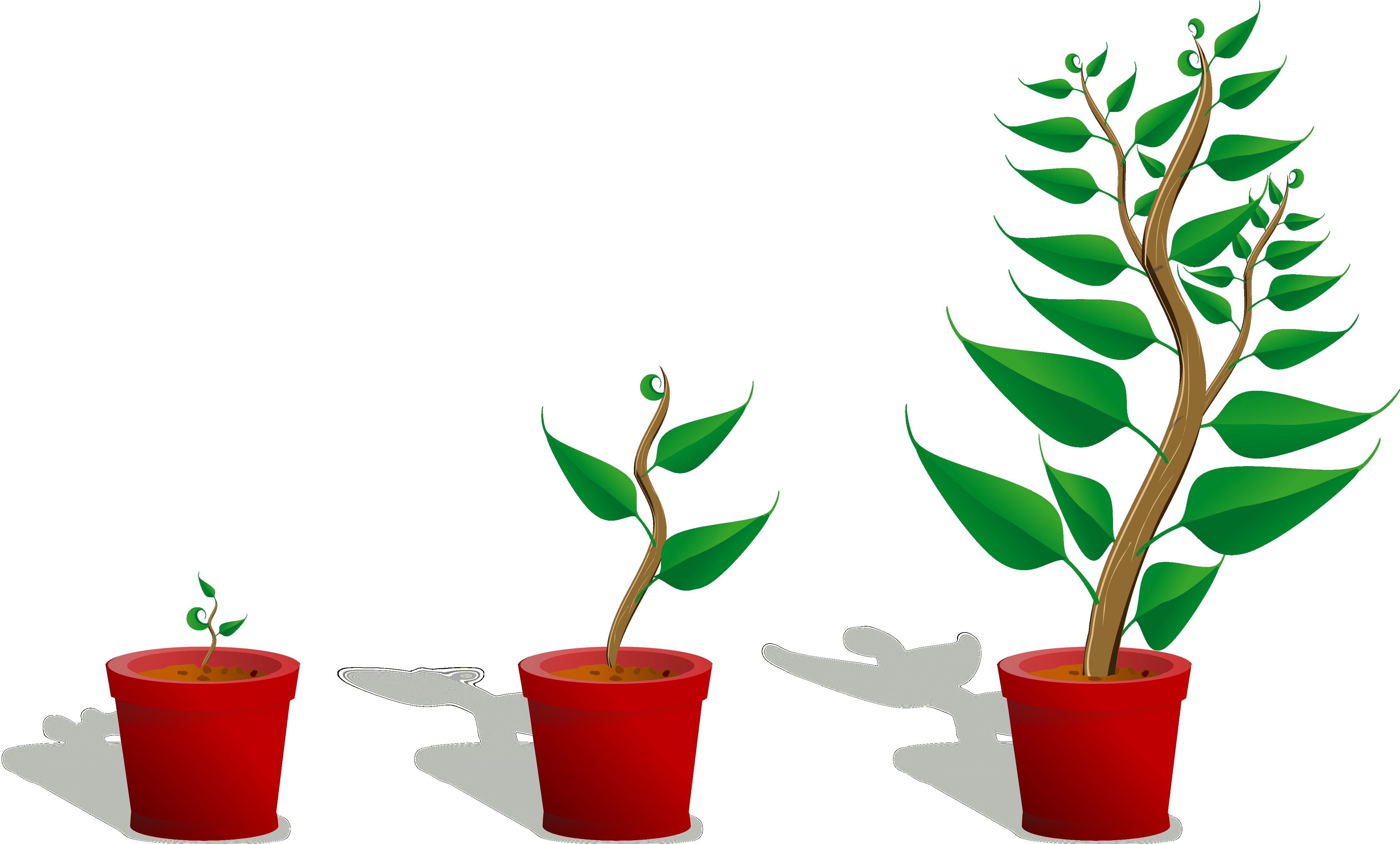 Gardening clipart vegetable garden. Top growing plant clip