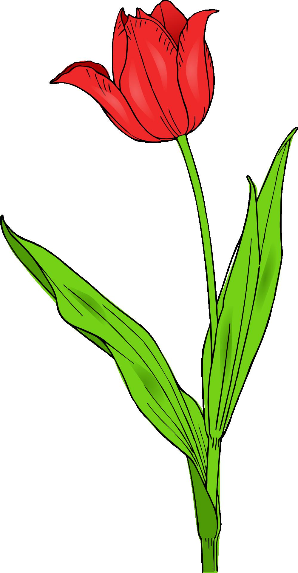 Flowers clipart tulip. Flower clip art free