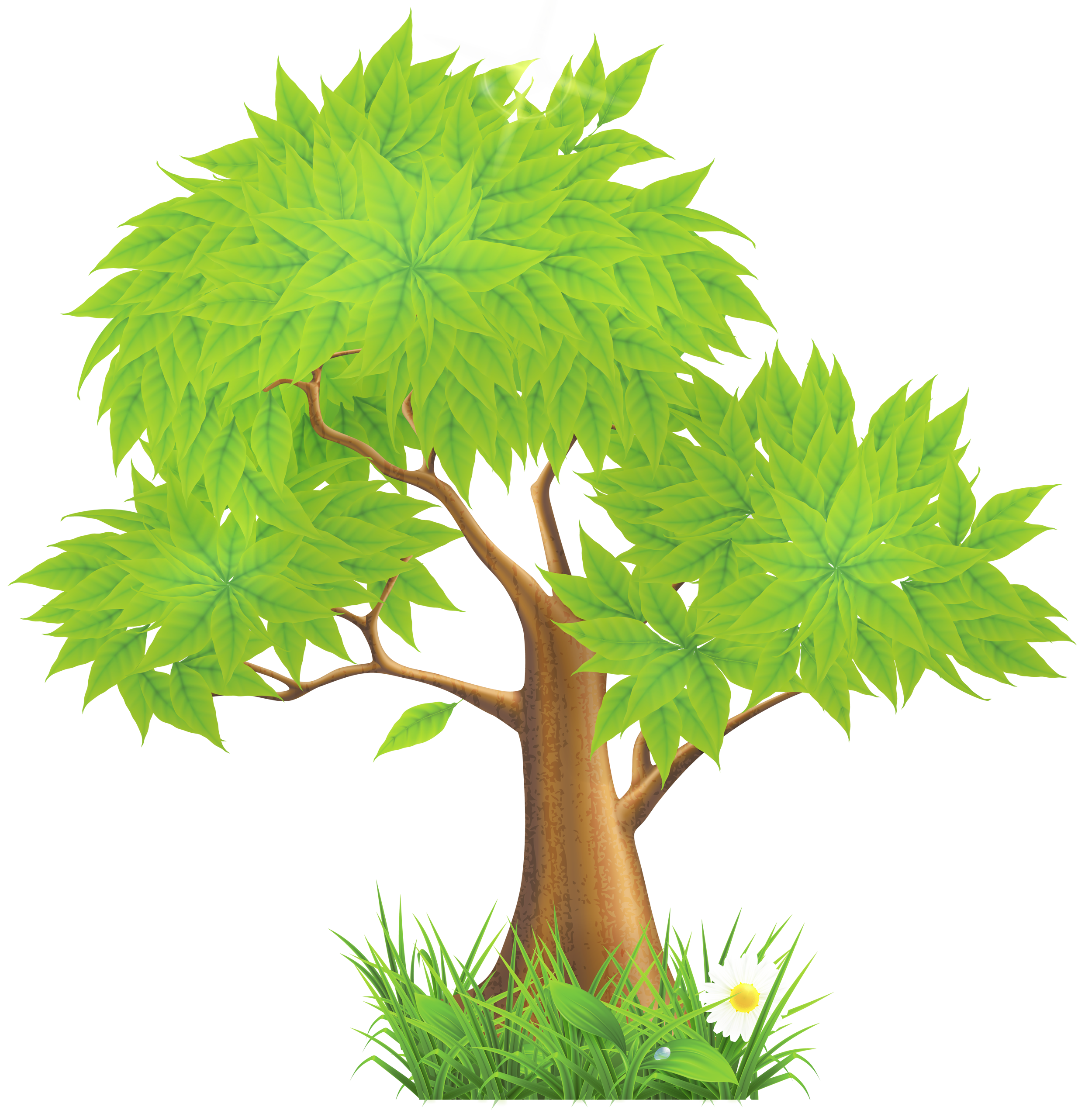 Pine png pinterest pinetreeclipartpng. Clipart rock tree