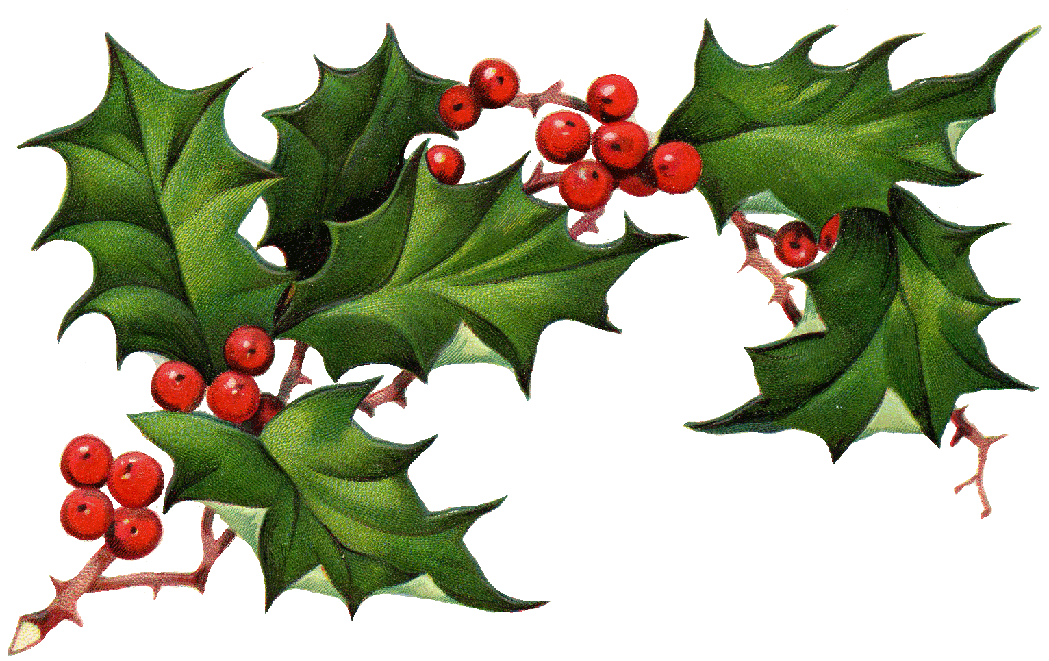 Clipart christmas holly.  collection of free