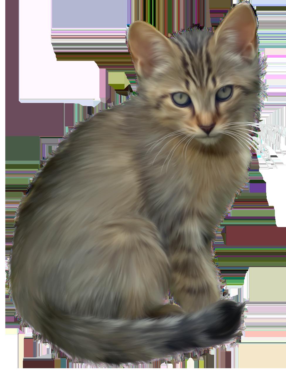 Clipart easter kitten. Cute png best web