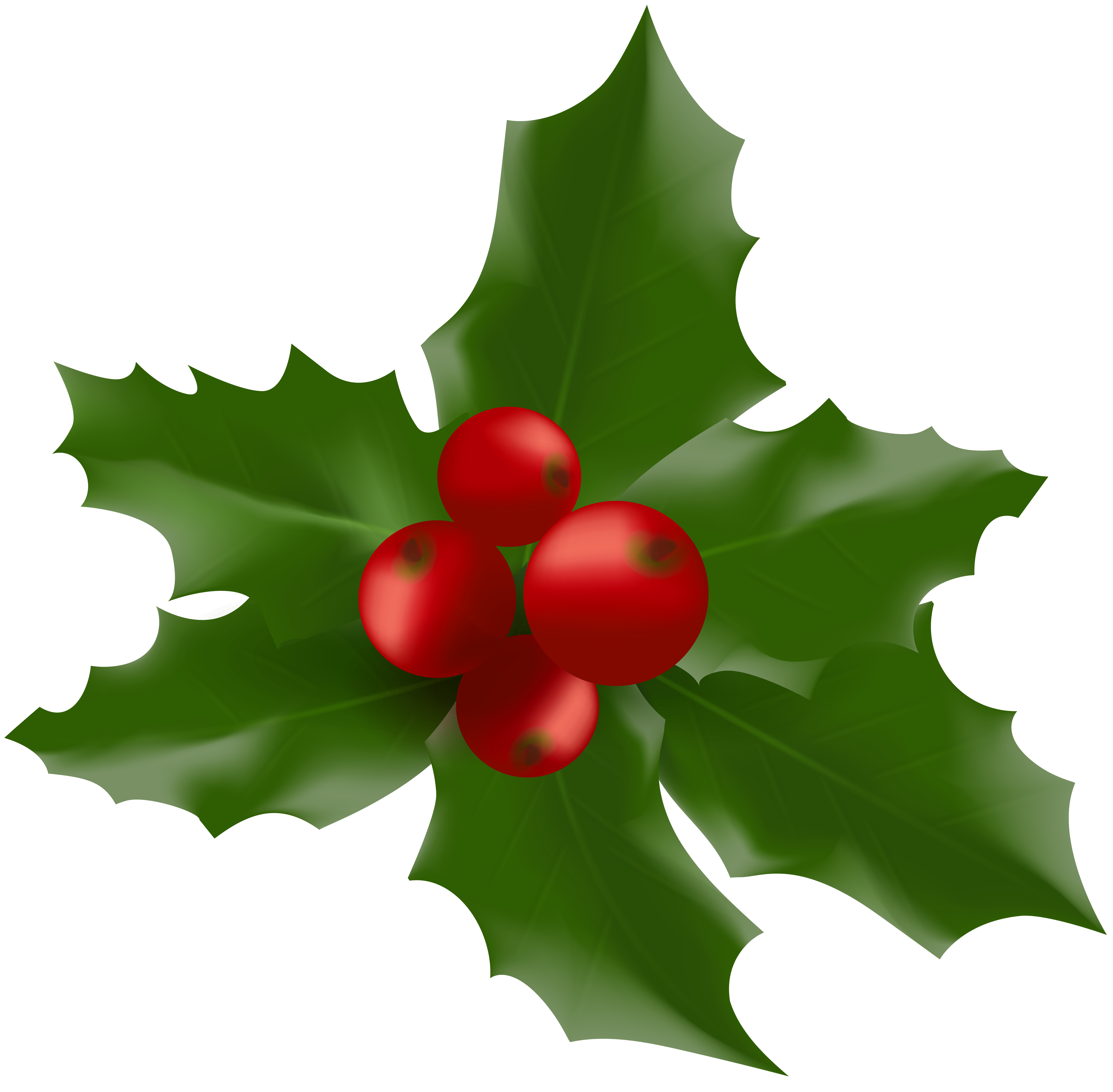Mistletoe large png image. Clipart christmas leaves