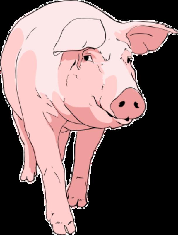 Pigs clipart transparent background. Png modern clip art
