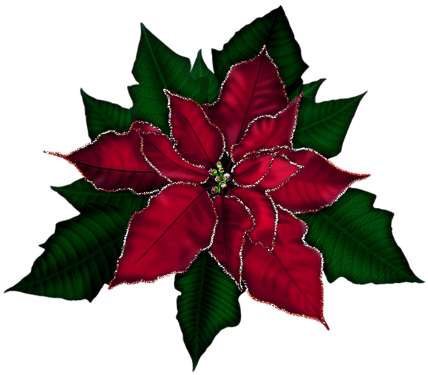 Gallery free pictures . Poinsettias clipart transparent background