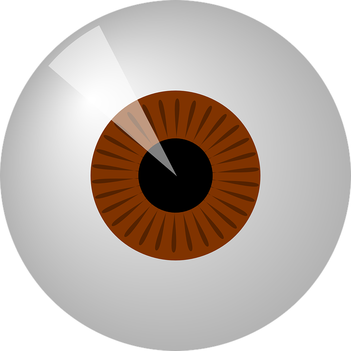 Brown eyes round eye. Eyeballs clipart eys