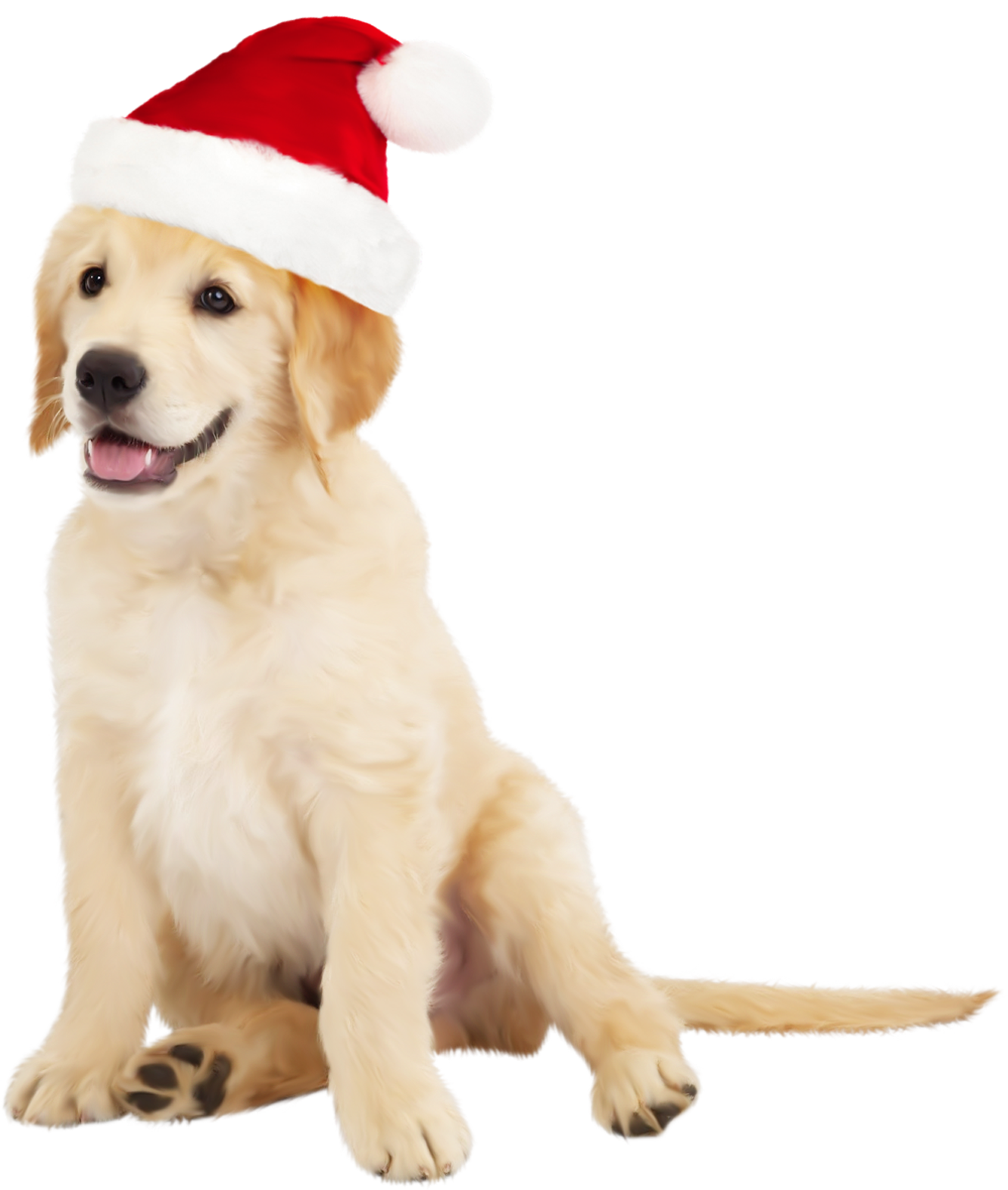 Dog with santa hat. Hats clipart cute