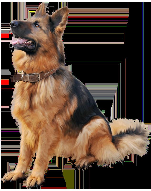 German shepherd png best. Dog clipart dental