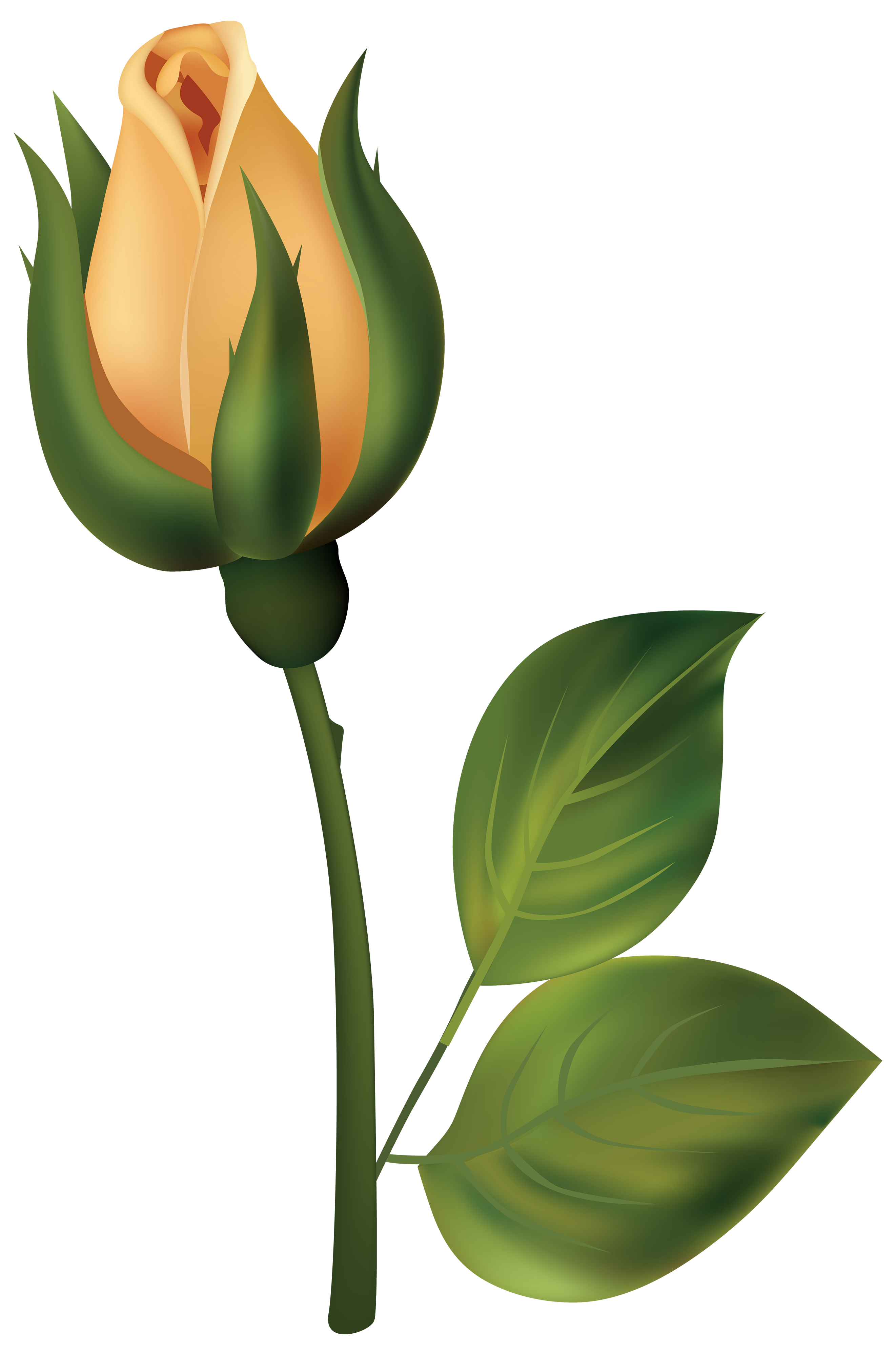 Clipart rose rose bud. Yellow png best web