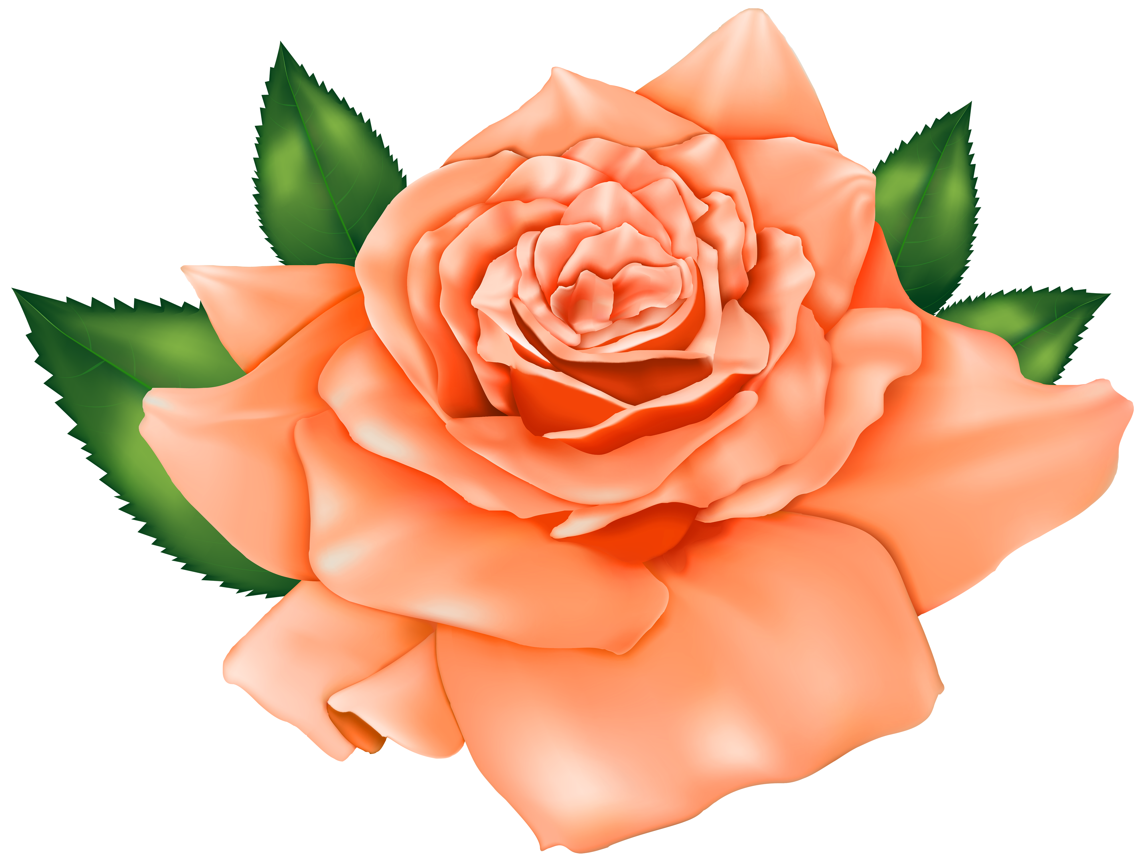 Beautiful orange png best. Rose clipart clip art