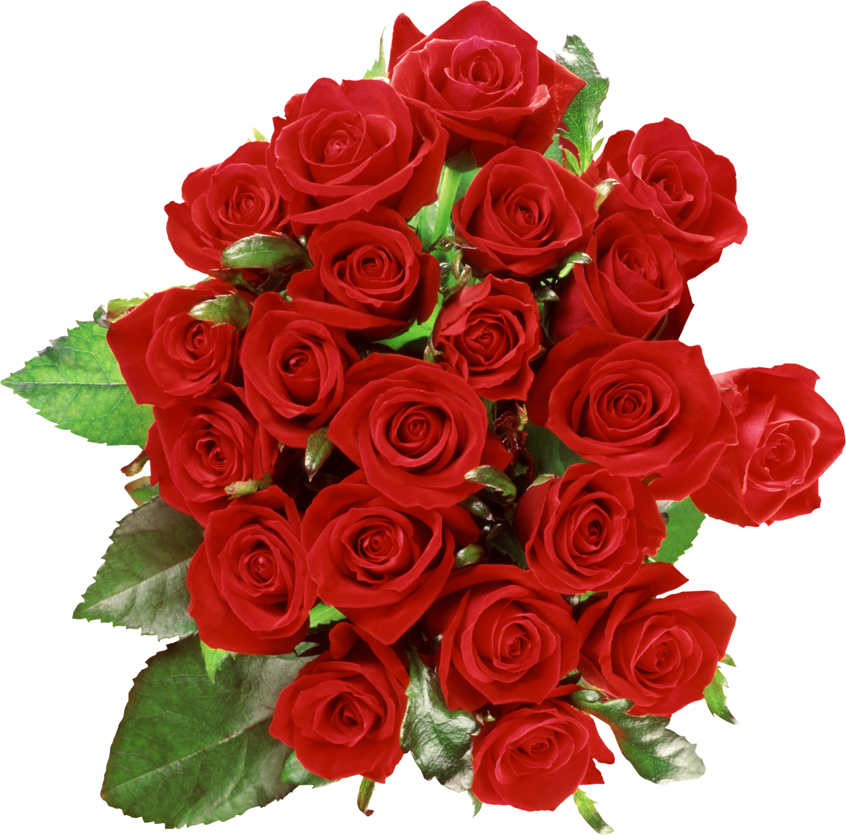 Hibiscus clipart phool. Red roses wedding bouquet