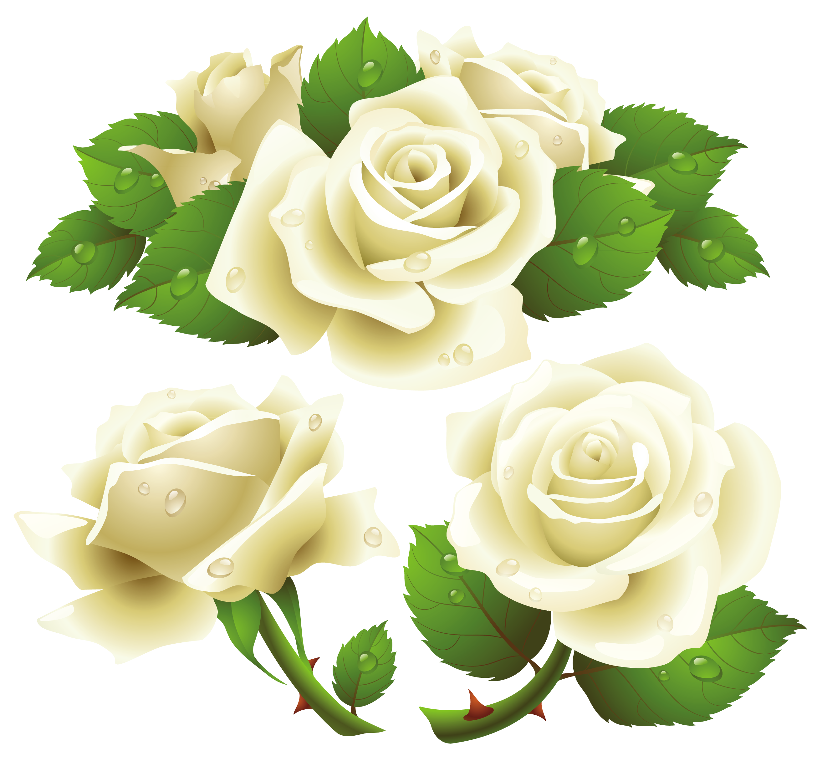 White twenty two isolated. Clipart roses rose bush