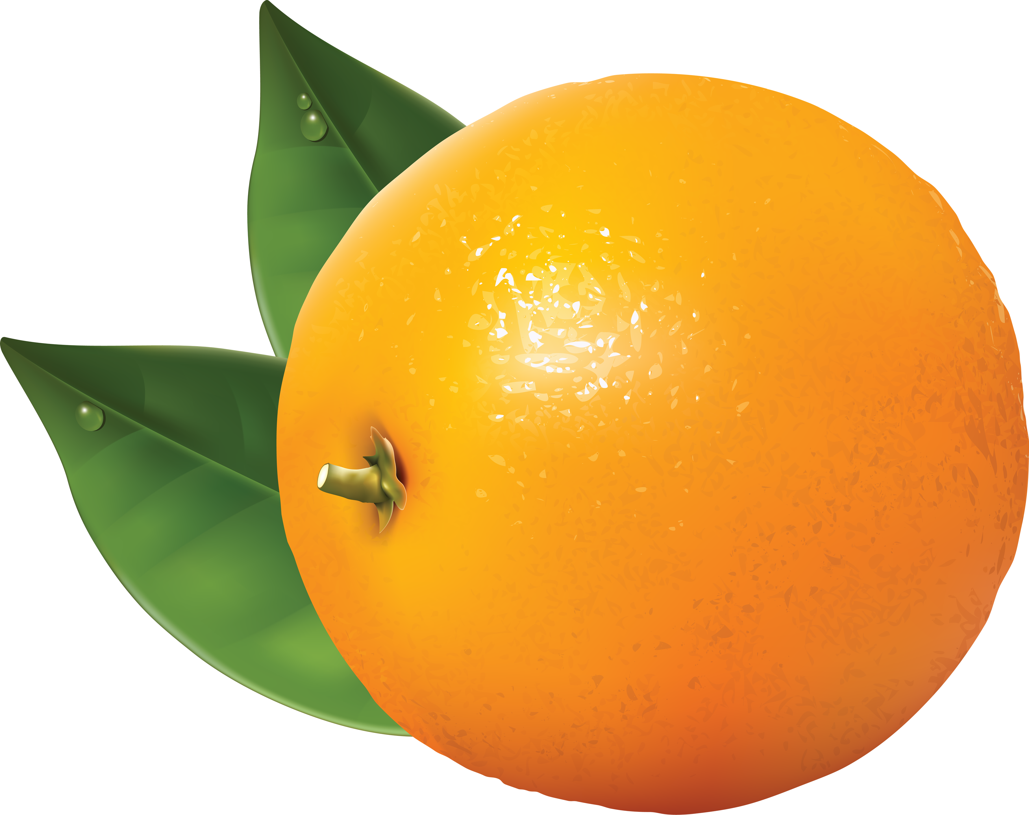 Twenty four isolated stock. Clipart png orange