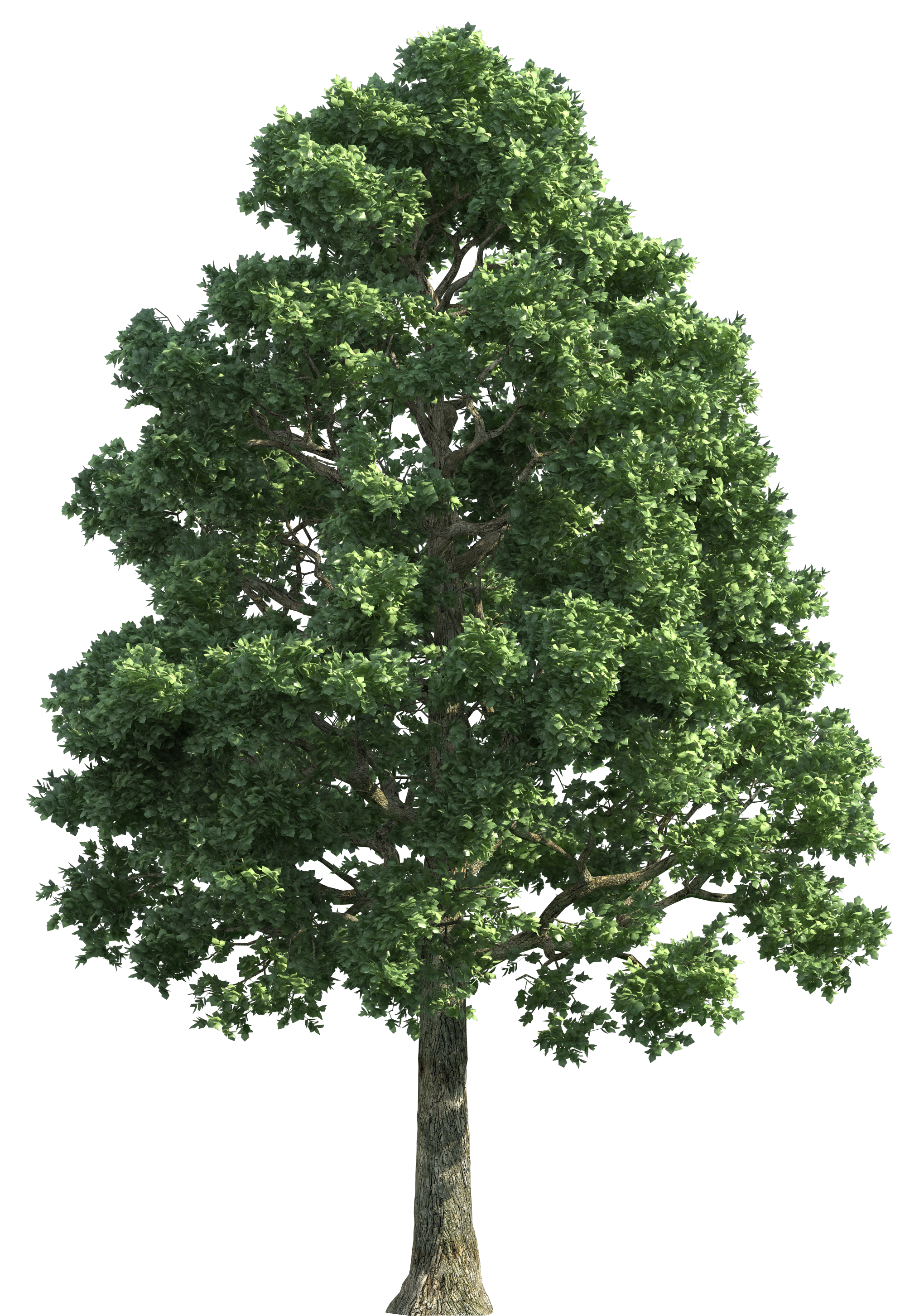 Clipart trees high resolution. Green realistic tree png