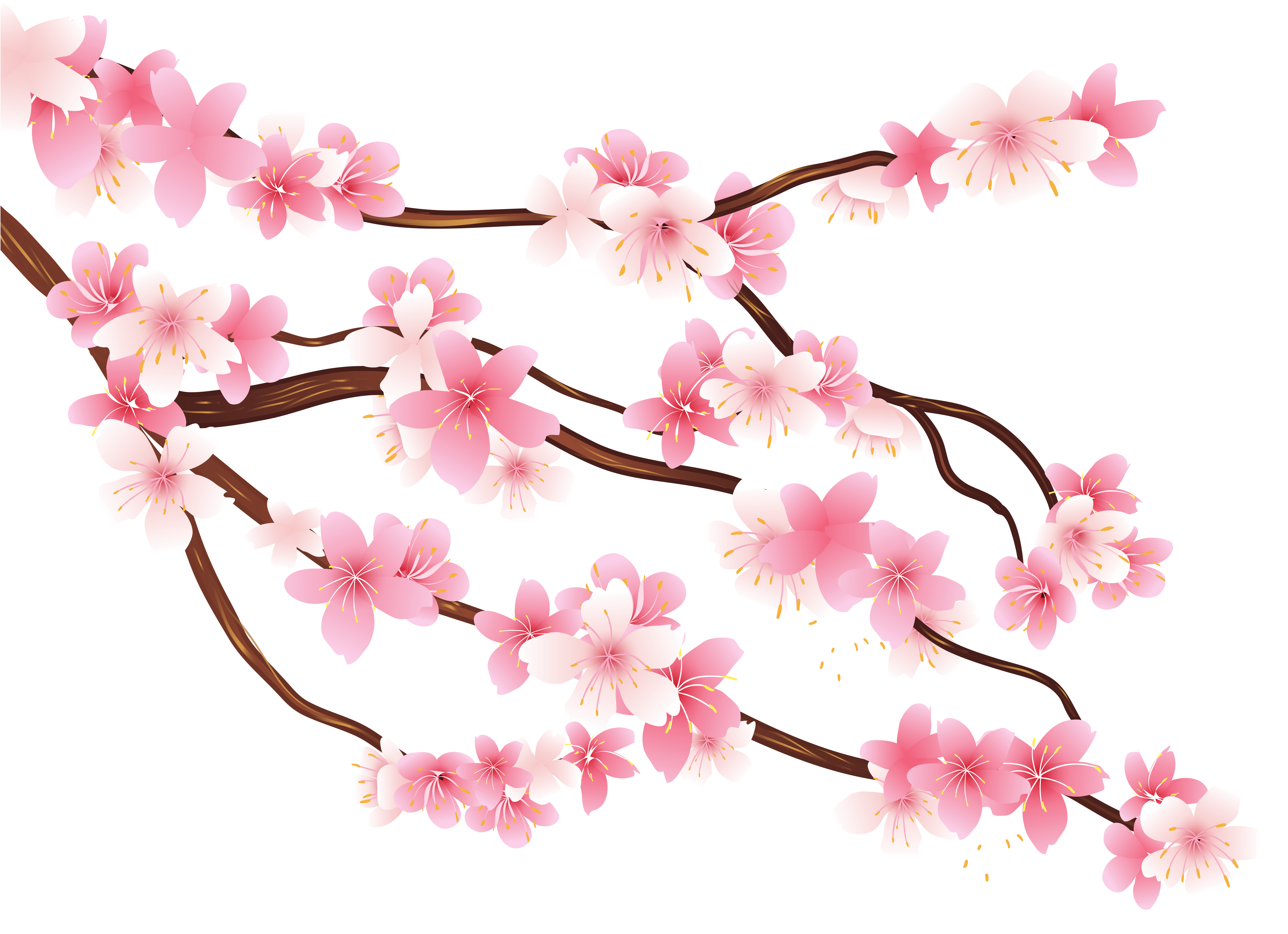 Pink spring png image. Nest clipart branch clipart