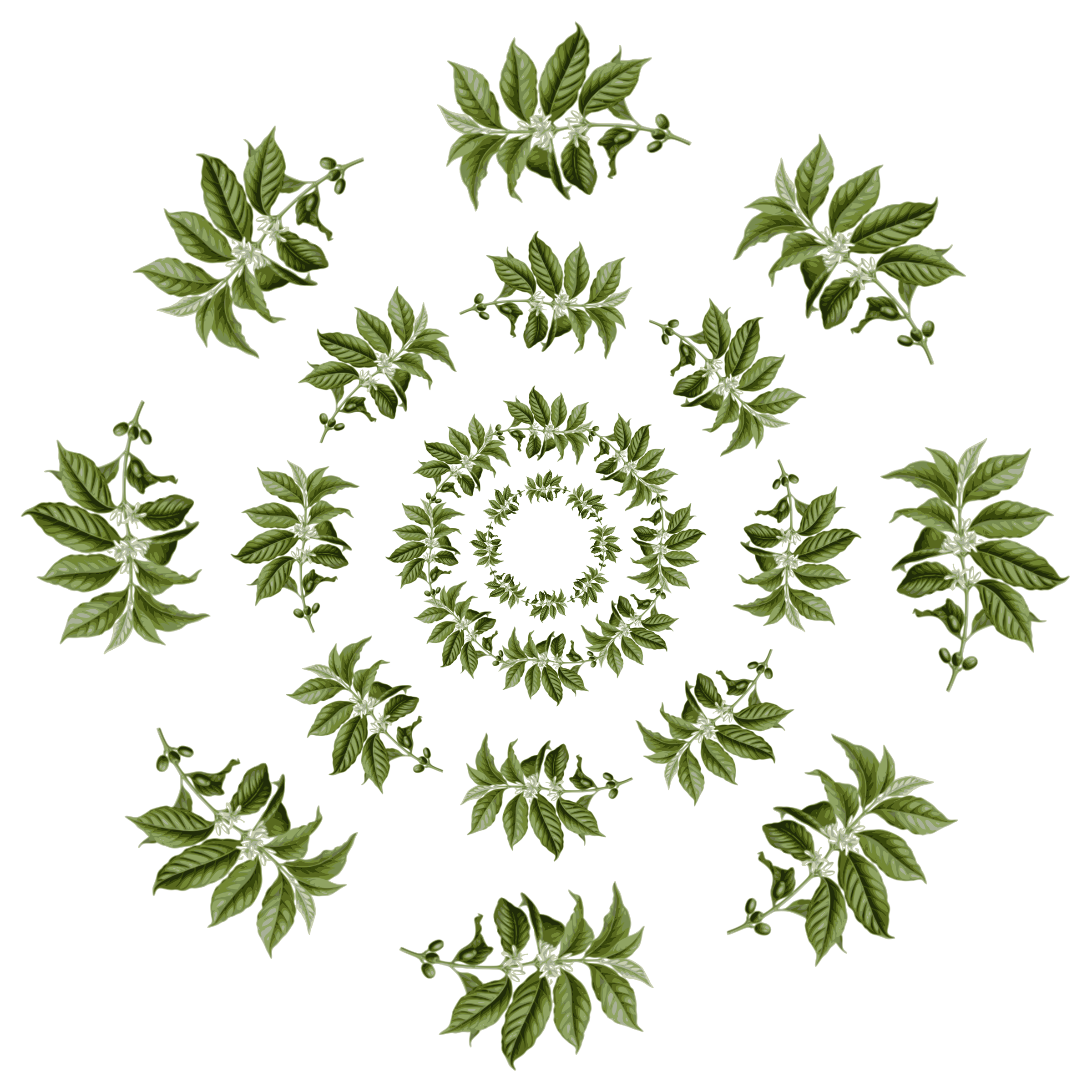 Leaves pattern big image. Flower clipart coffee