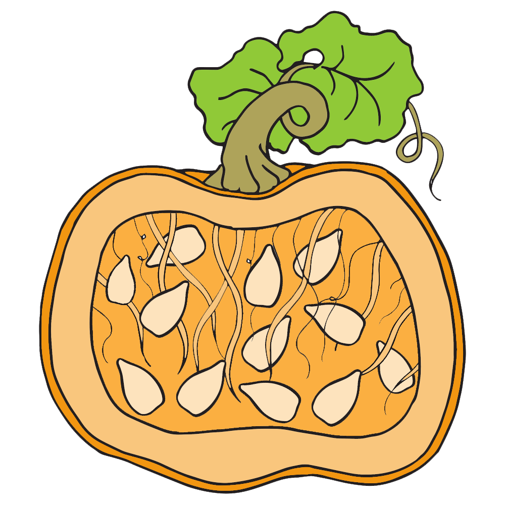 Pumpkin clipart stem. Homeschool parts of a