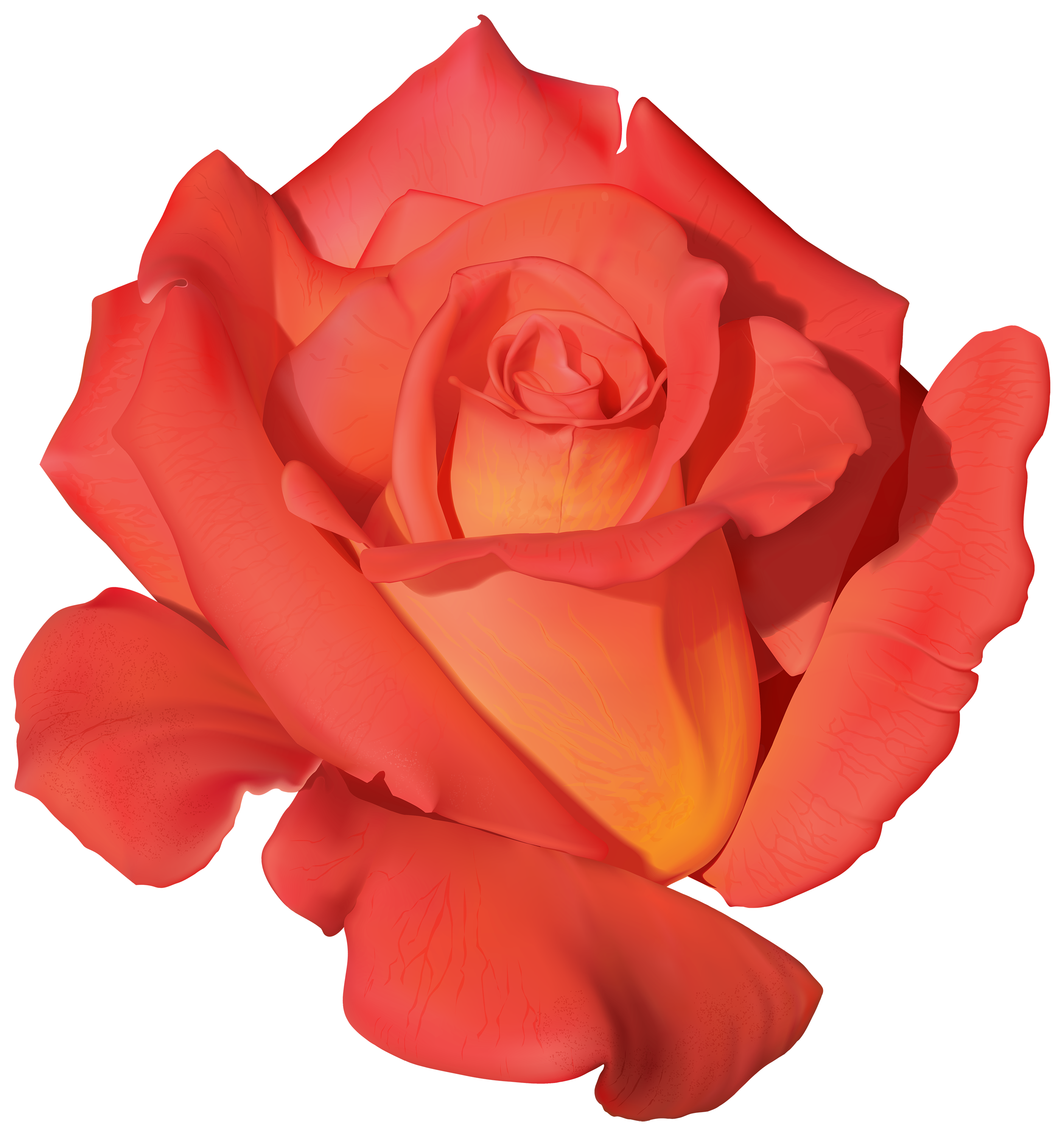 Orange flower png. Rose clipart best web