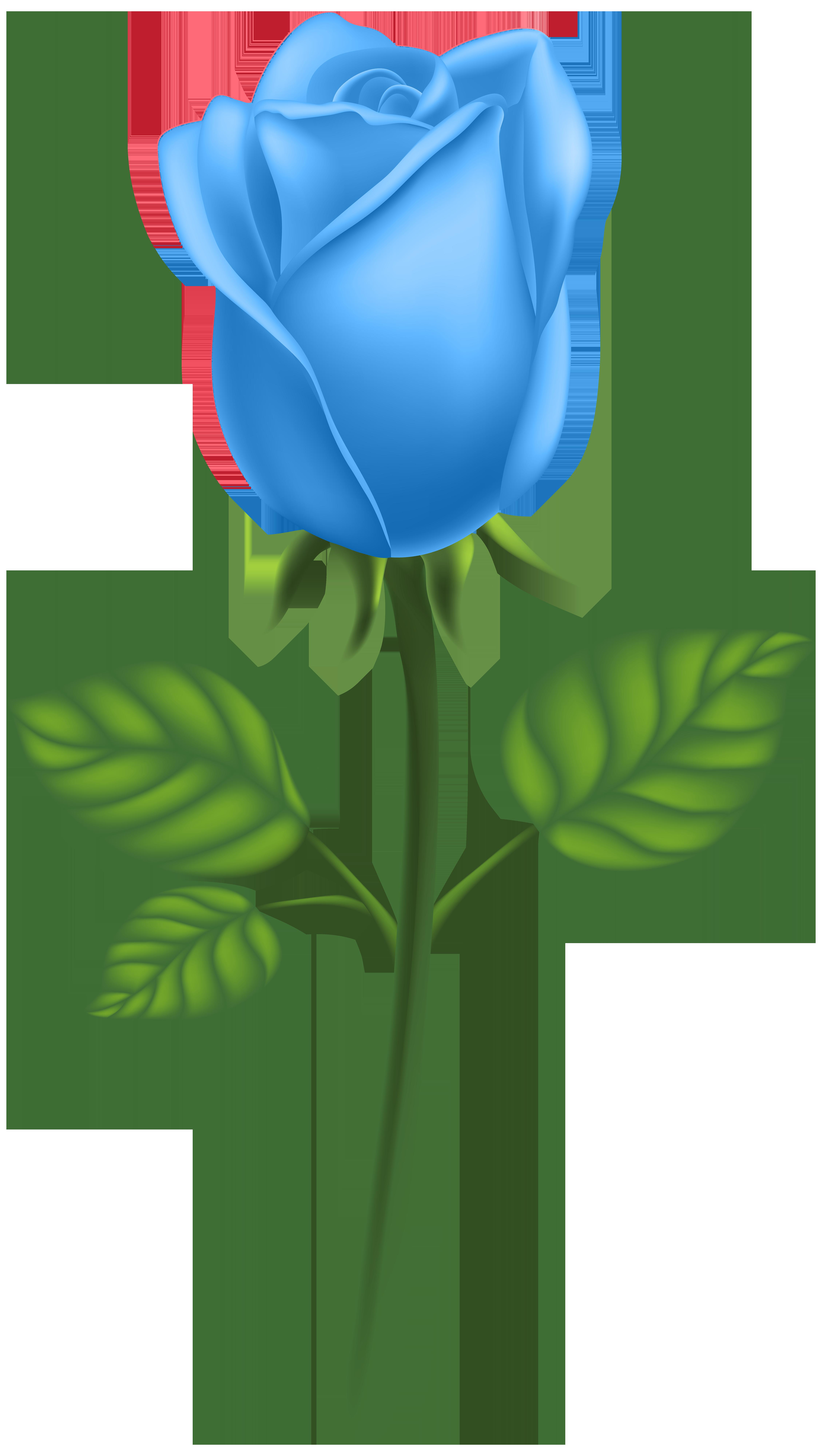 Garden roses adobe illustrator. Pear clipart rose