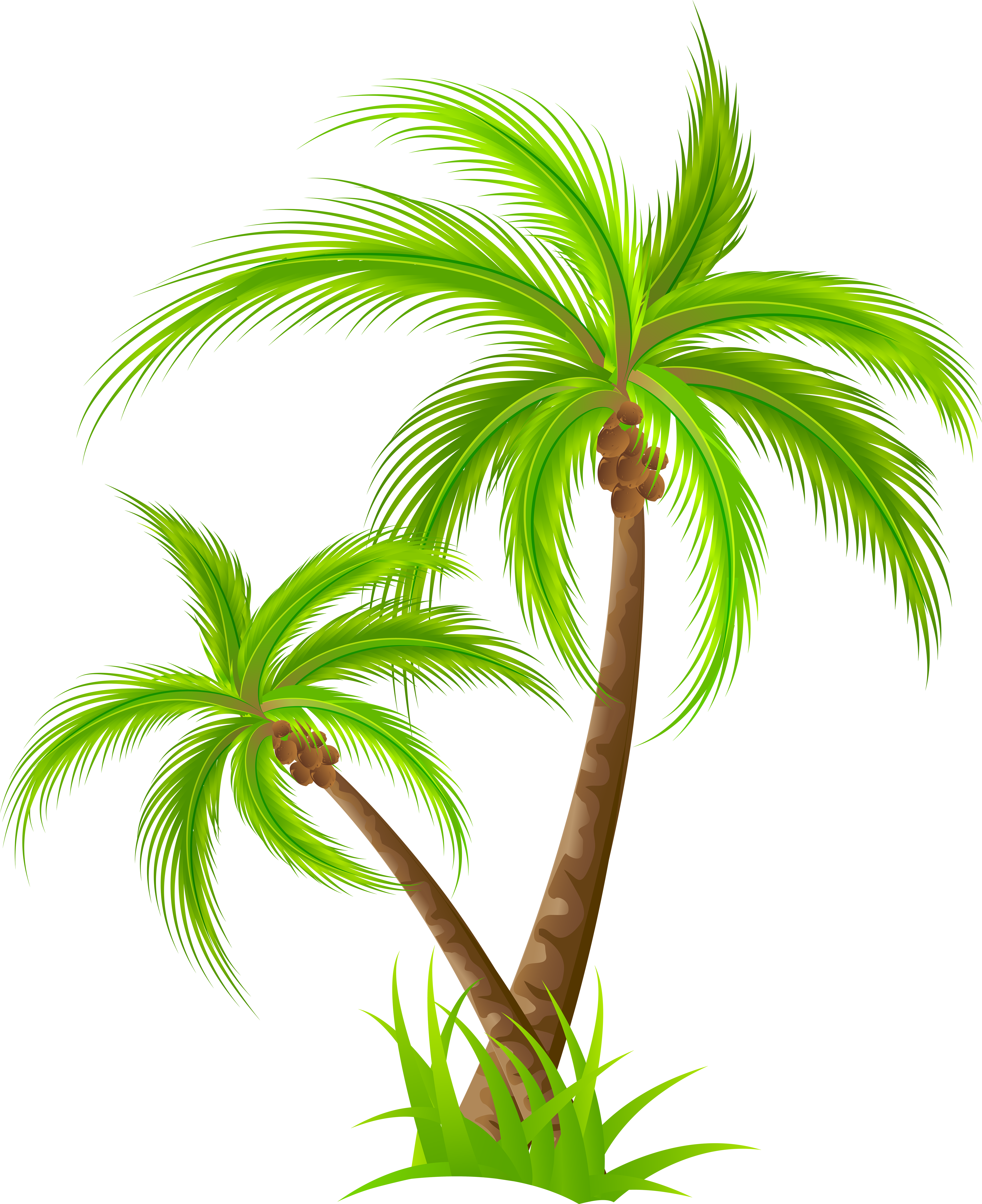 Palm png clip art. Tree clipart birthday