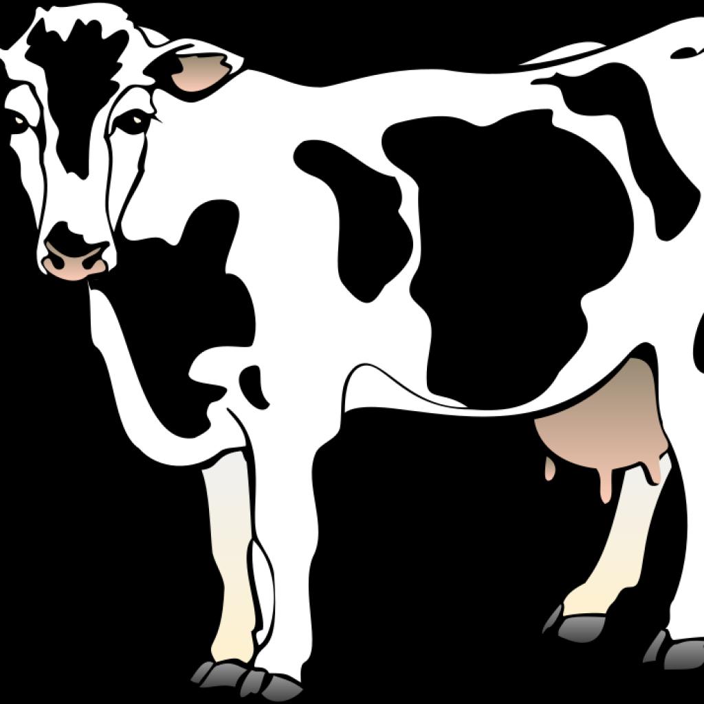 Clipart panda cow. Money hatenylo com cows