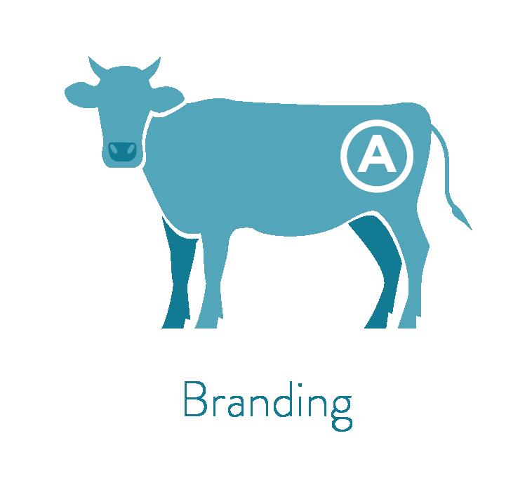 Sam henning design work. Cow clipart branding