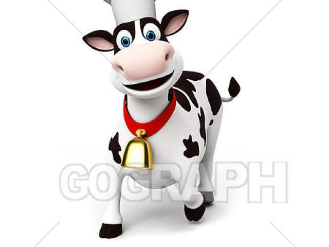X free clip art. Cow clipart chef
