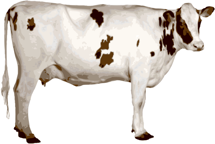 Cow clipart cow indian. Png image free cows