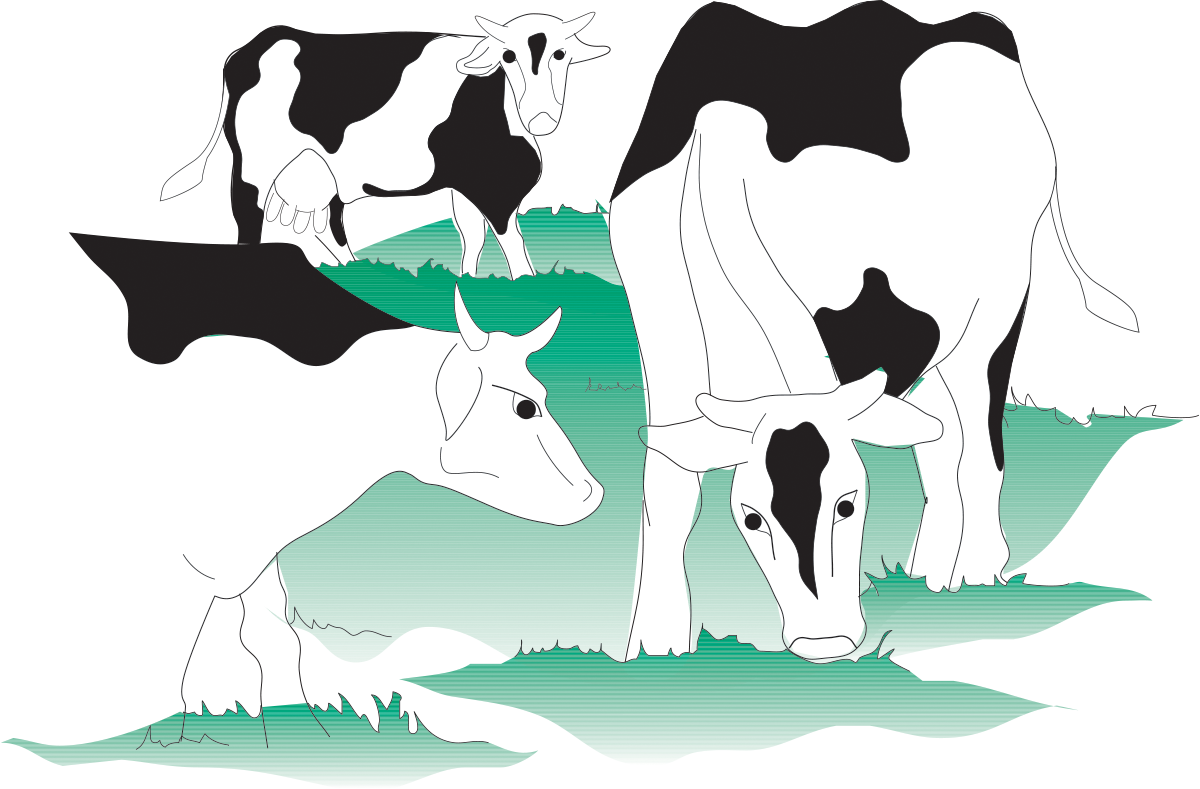 Primary production of milk. Cow clipart stable