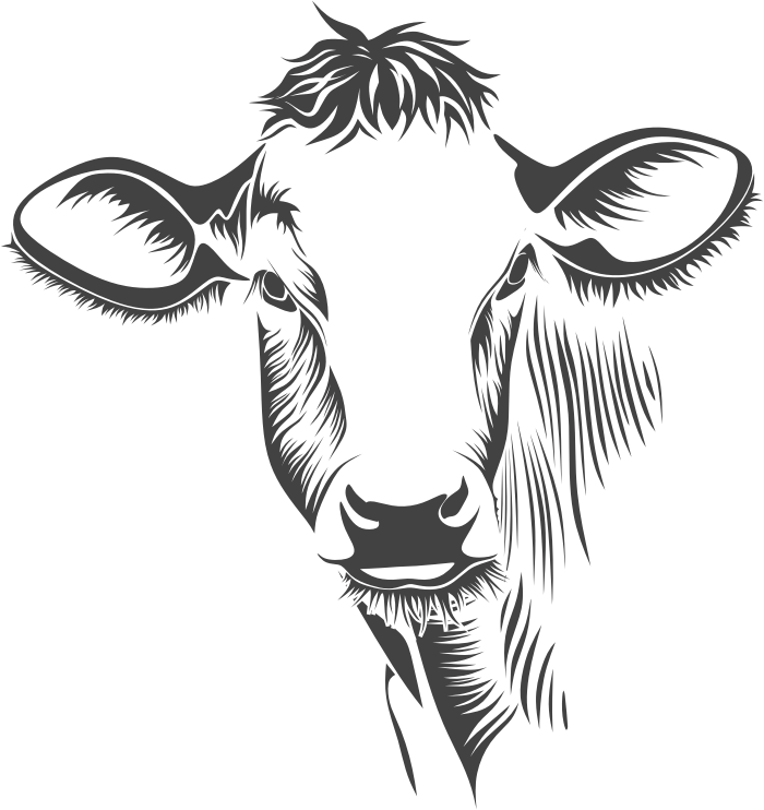 collection of face. Cow clipart black and white